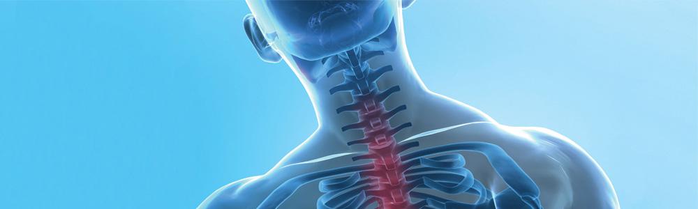 spine-header